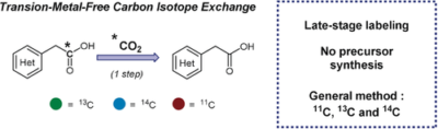 Transition‐Metal‐Free Carbon Isotope Exchange of Phenyl Acetic Acids