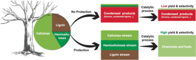 Protection Strategies Enable Selective Conversion of Biomass