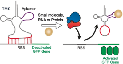 Modular and Versatile Trans‐Encoded Genetic Switches