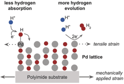 Strain Influences the Hydrogen Evolution Activity and Absorption Capacity of Palladium