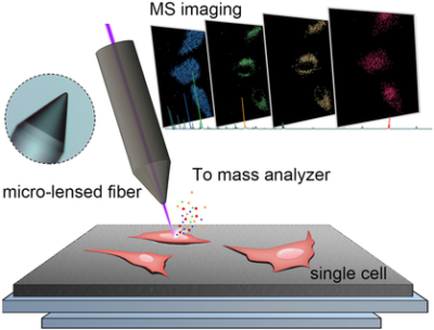 Micro‐Lensed Fiber Laser Desorption Mass Spectrometry Imaging Reveals Subcellular Distribution of Drugs within Single Cells