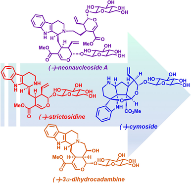 Total Syntheses of (−)‐Strictosidine and Related Indole Alkaloid Glycosides