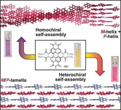 Self‐Sorting Supramolecular Polymerization: Helical and Lamellar Aggregates of Tetra‐Bay‐Acyloxy Perylene Bisimide