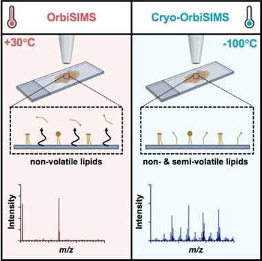 Cryogenic OrbiSIMS Localizes Semi‐Volatile Molecules in Biological Tissues