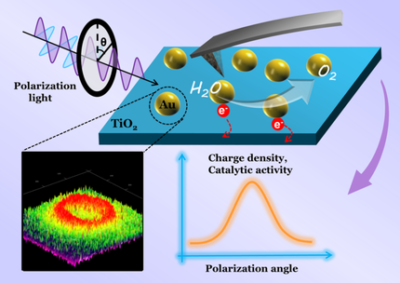 The Polarization Effect in Surface‐Plasmon‐Induced Photocatalysis on Au/TiO2 Nanoparticles