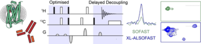 Enabling NMR Studies of High Molecular Weight Systems Without the Need for Deuteration: The XL‐ALSOFAST Experiment with Delayed Decoupling