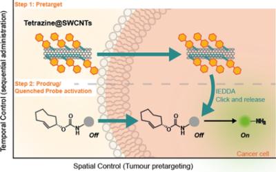 "Tetrazine Carbon Nanotubes for Pretargeted InVivo ""Click‐to‐Release"" Bioorthogonal Tumour Imaging"
