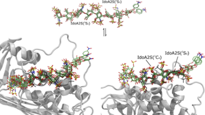 Degeneracy of the Antithrombin Binding Sequence in Heparin: 2‐O‐Sulfated Iduronic Acid Can Replace the Critical Glucuronic Acid