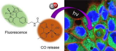 Light‐Activated Carbon Monoxide Prodrugs Based on Bipyridyl Dicarbonyl Ruthenium(II) Complexes
