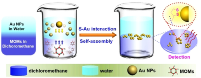 Controlled Self‐Assembly of Metallacycle‐Bridged Gold Nanoparticles for Surface‐Enhanced Raman Scattering
