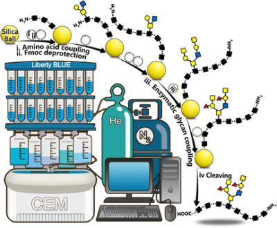 Machine‐Driven Chemoenzymatic Synthesis of Glycopeptide