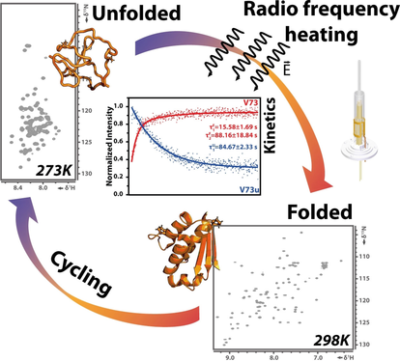 Refolding of Cold‐Denatured Barstar Induced by Radio‐Frequency Heating: A New Method to Study Protein Folding by Real‐Time NMR Spectroscopy