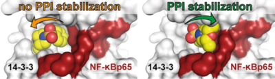 Fragment‐Based Stabilizers of Protein–Protein Interactions through Imine‐Based Tethering