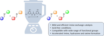Hydrogen‐Bond Catalysis of Imine Exchange in Dynamic Covalent Systems