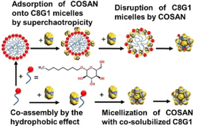 Highlights on the Binding of Cobalta‐Bis‐(Dicarbollide) with Glucose Units