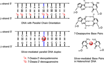Heterochiral DNA with Complementary Strands with α‐d and β‐d Configurations: Hydrogen‐Bonded and Silver‐Mediated Base Pairs with Impact of 7‐Deazapurines Replacing Purines