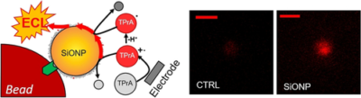 Dye‐Doped Silica Nanoparticles for Enhanced ECL‐Based Immunoassay Analytical Performance