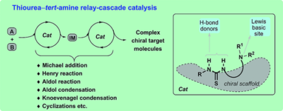 Thiourea–Tertiary Amine Promoted Cascade Catalysis: A Tool for Complexity Generation