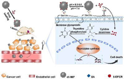 Molecularly Imprinted Polymer‐Based Smart Prodrug Delivery System for Specific Targeting, Prolonged Retention, and Tumor Microenvironment‐Triggered Release