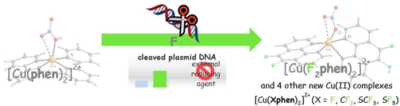 Forty Years after the Discovery of Its Nucleolytic Activity: [Cu(phen)2]2+ Shows Unattended DNA Cleavage Activity upon Fluorination