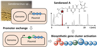 The Sandarazols are Cryptic and Structurally Unique Plasmid‐Encoded Toxins from a Rare Myxobacterium**