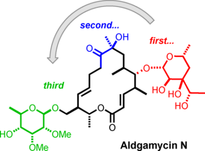Scalable De Novo Synthesis of Aldgarose and Total Synthesis of Aldgamycin N