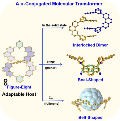 A Molecular Transformer: A π‐Conjugated Macrocycle as an Adaptable Host