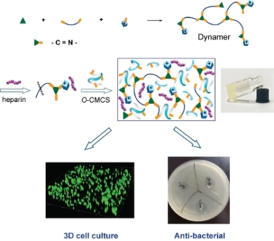 Double‐Network Heparin Dynamic Hydrogels: Dynagels as Anti‐bacterial 3D Cell Culture Scaffolds