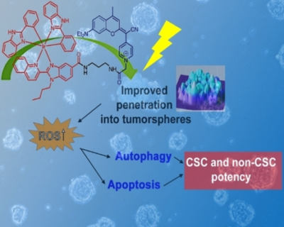 A Cyclometalated IrIII Complex Conjugated to a Coumarin Derivative Is a Potent Photodynamic Agent against Prostate Differentiated and Tumorigenic Cancer Stem Cells