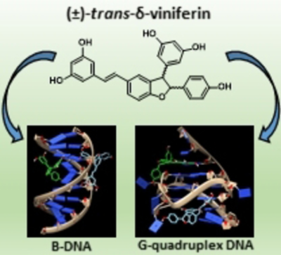 Plant‐Derived Stilbenoids as DNA‐Binding Agents: From Monomers to Dimers