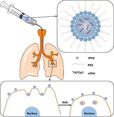 A Two-Pronged Pulmonary Gene Delivery Strategy: A Surface-Modified Fullerene Nanoparticle and a Hypotonic Vehicle