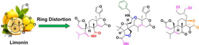 Limonin as a Starting Point for the Construction of Compounds with High Scaffold Diversity