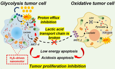 Zwitterion-Based Hydrogen Sulfide Nanomotors Induce Multiple Acidosis in Tumor Cells by Destroying Tumor Metabolic Symbiosis