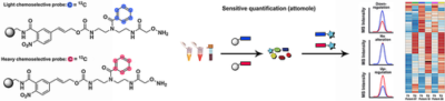 Chemoselective and Highly Sensitive Quantification of Gut Microbiome and Human Metabolites