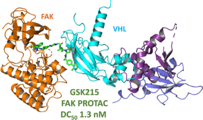 Discovery and Characterisation of Highly Cooperative FAK-Degrading PROTACs