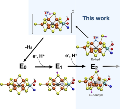 The E2 state of FeMoco: Hydride Formation versus Fe Reduction and a Mechanism for H2 Evolution