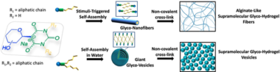 Hierarchical Self-Assembly of Amphiphilic β-C-Glycosylbarbiturates into Multiresponsive Alginate-Like Supramolecular Hydrogel Fibers and Vesicle Hydrogel